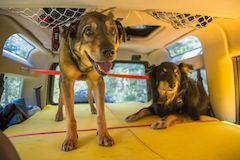 Dog buds ready for an off road adventure in their Land Rover