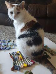 cat stitching helper
