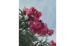 Example Mockup - Flowers