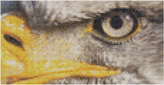 Eagle Cross-Stitch Mockup