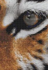 tiger mock-up