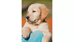 Example Mockup - Golden Retriever Puppy