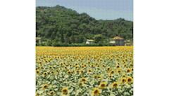 Example Mockup - Sunflowers